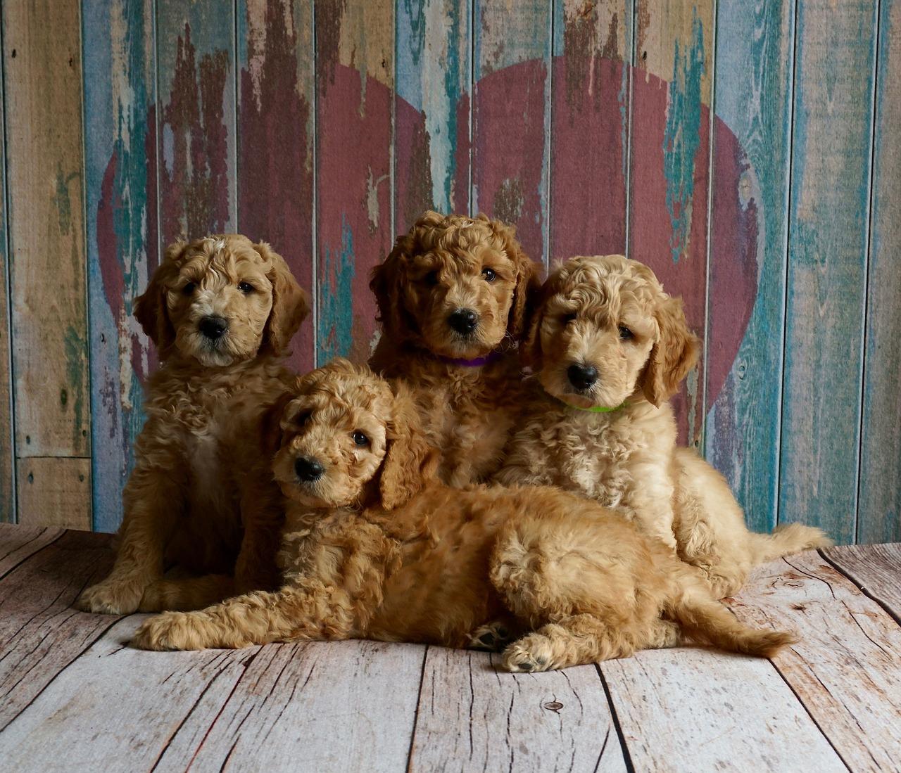 puppies, heart, love